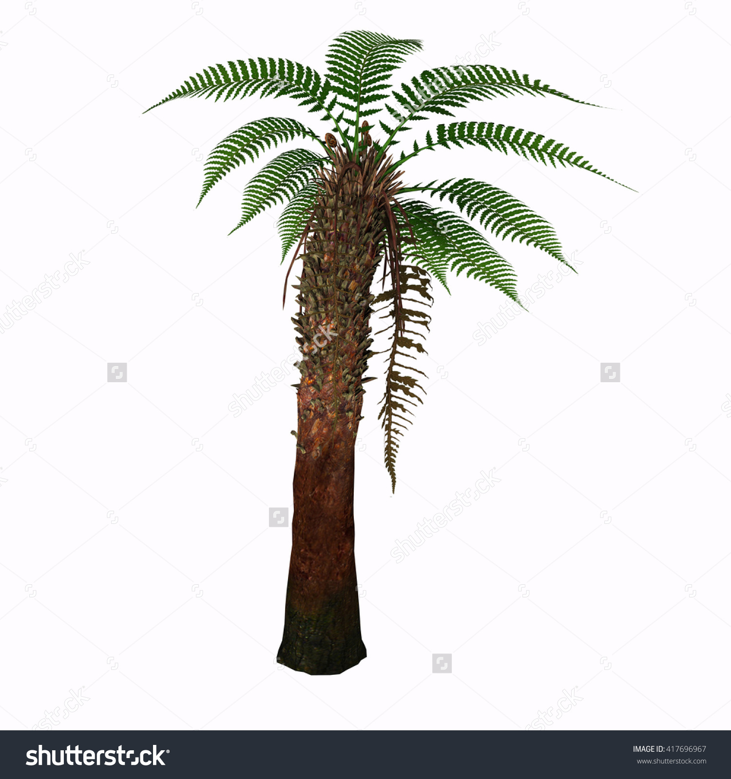 Dicksonia Tree 3d Illustration Dicksonia Antarctica Stock.