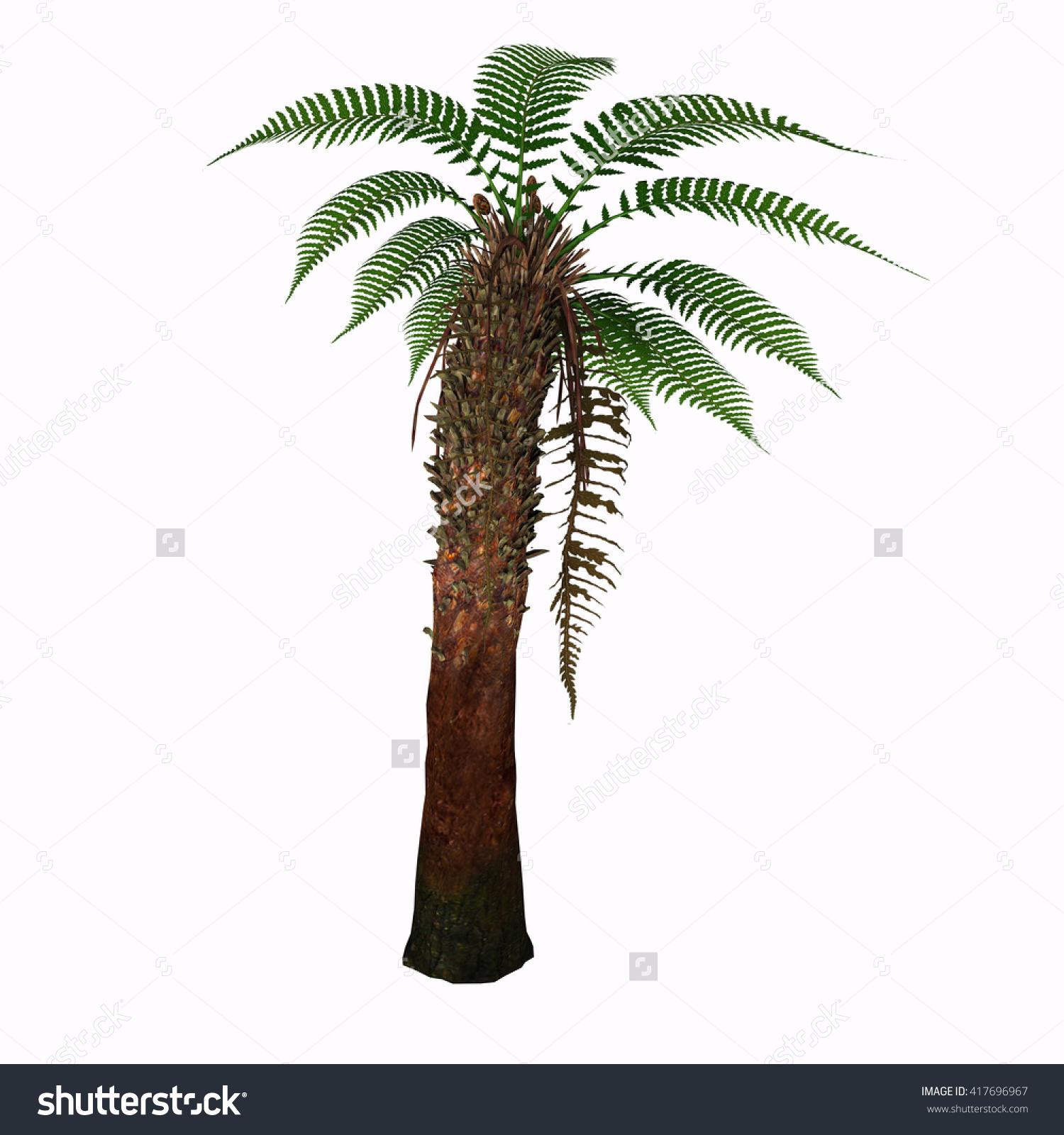 Dicksonia Tree 3d Illustration Dicksonia Antarctica Stock.