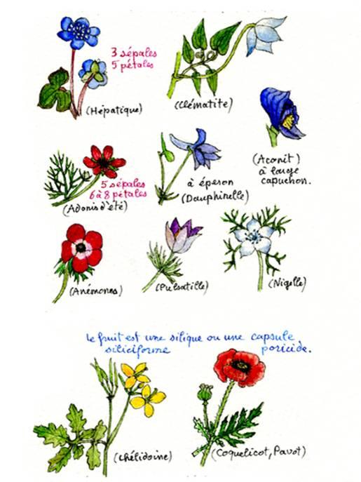 Carnets de botanique.