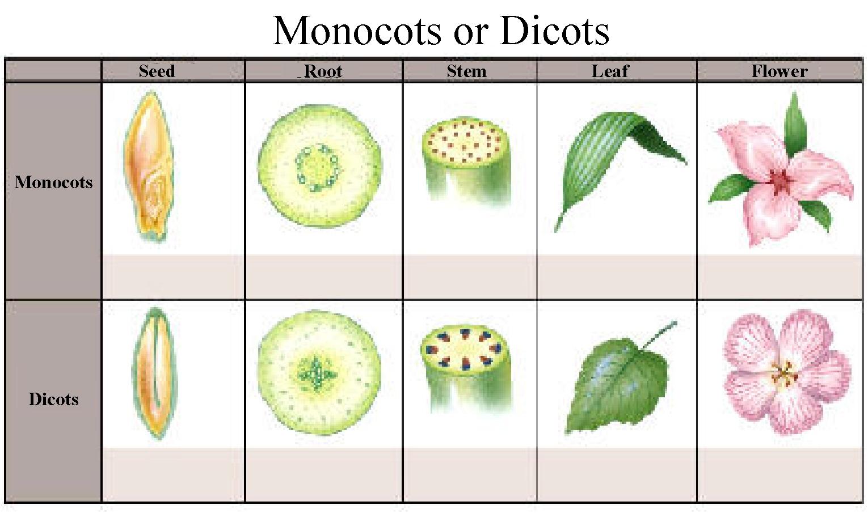 Monocot examples.