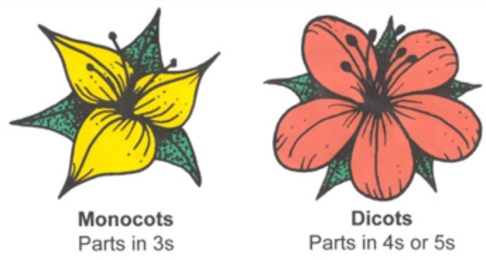 Monocot and dicot.