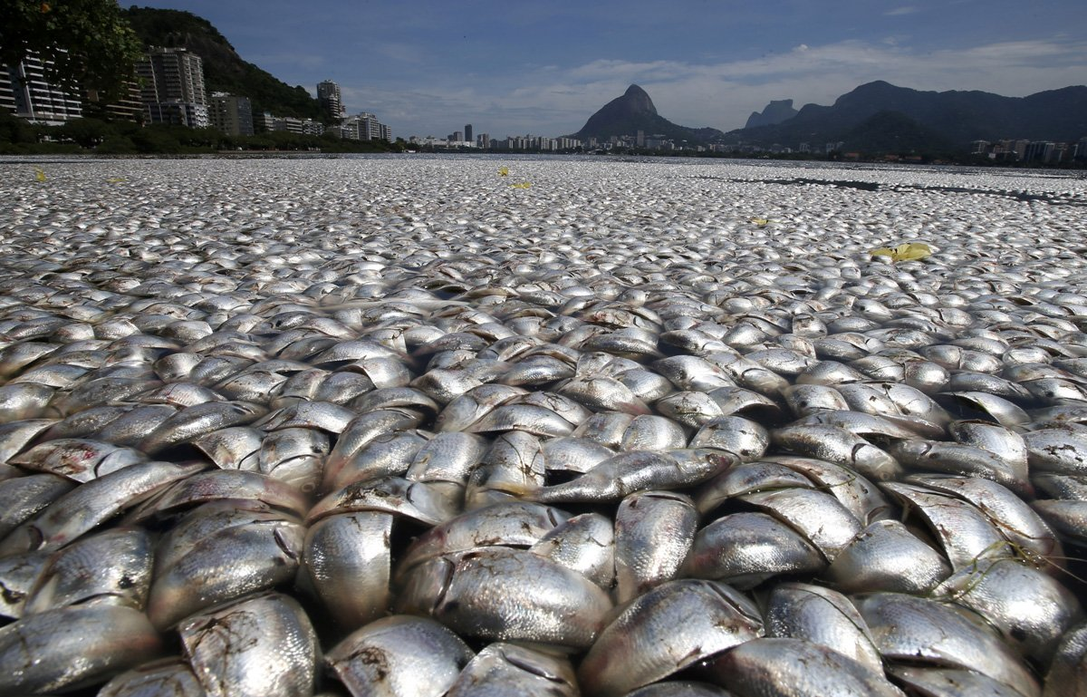 Dead Fish.