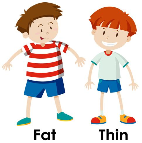 Differences between fat and thing.
