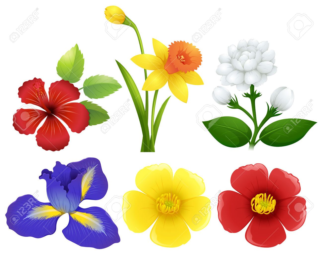 Different types of flowers illustration.