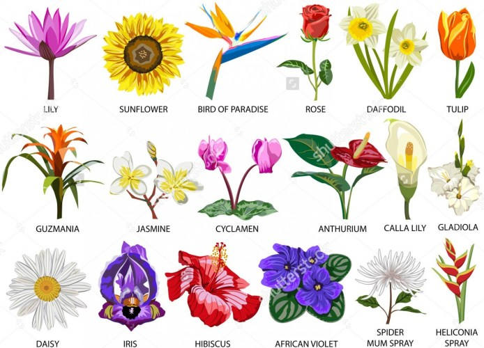 Wildflower clipart different flower.