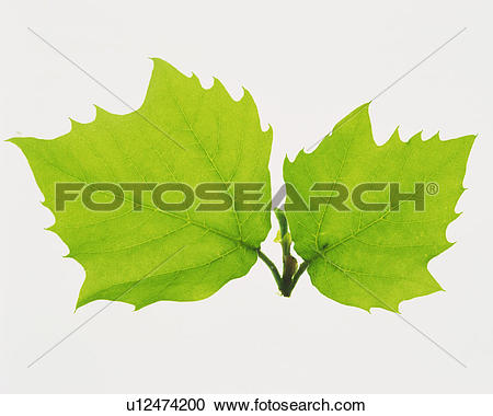 Stock Photography of Two Different.