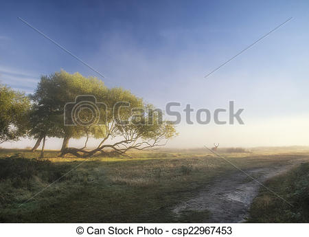 Stock Images of Beautiful diffused light on landscape with red.