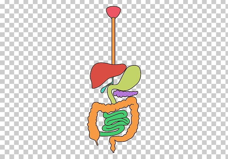 Organ Human Digestive System Digestion Apparato Digerente PNG.
