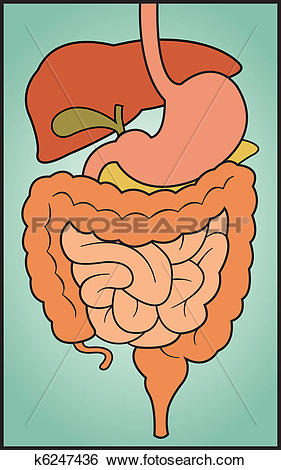 Clip Art of Digestive System k6247436.