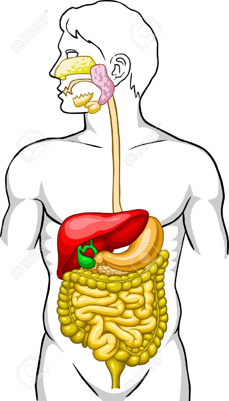 Clipart digestion.