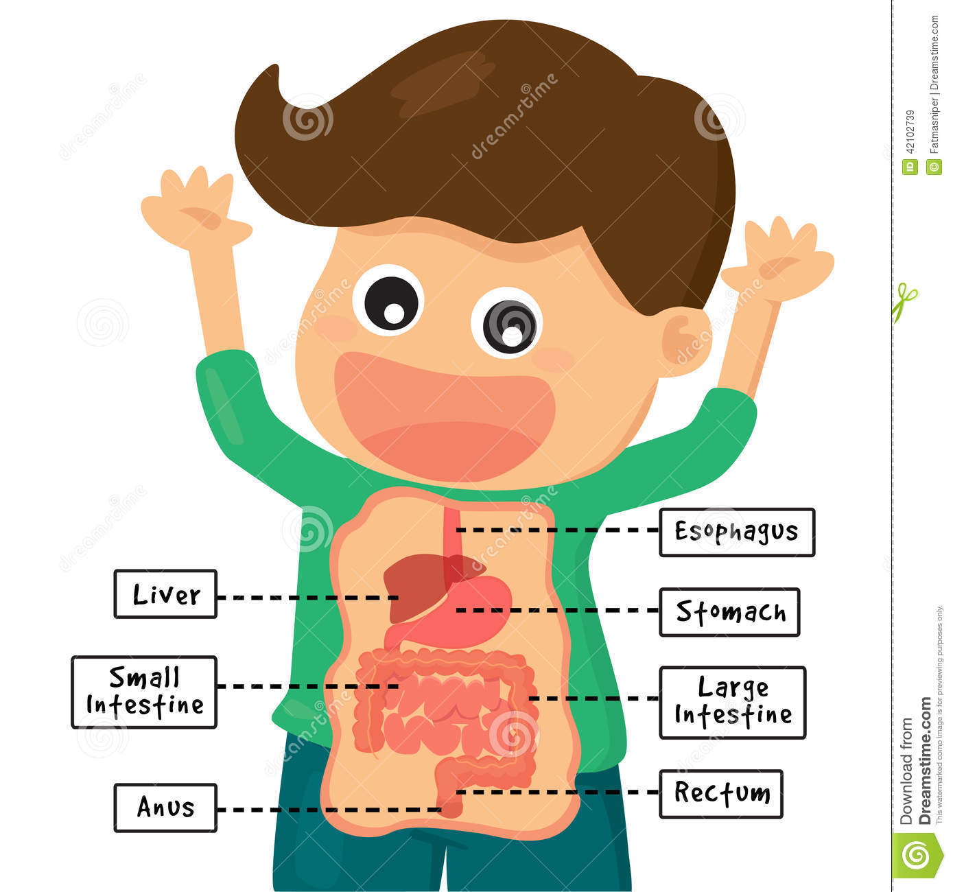 Clipart of human digestion.