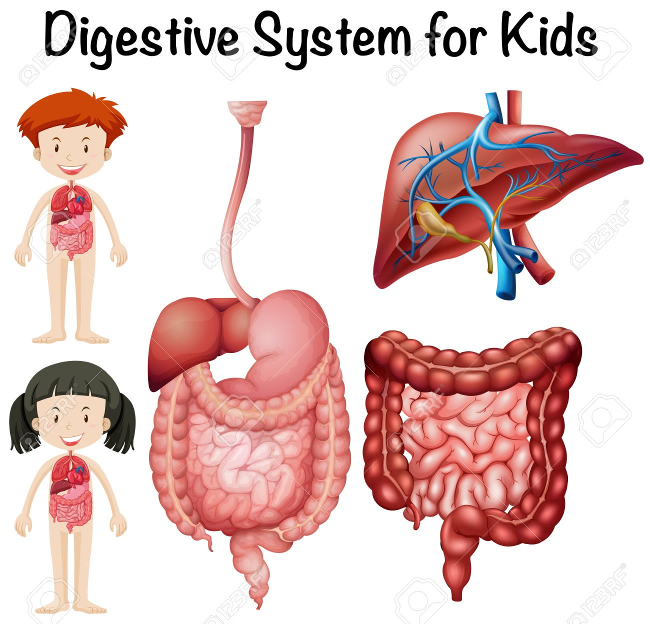 Digestive system for kids illustration.