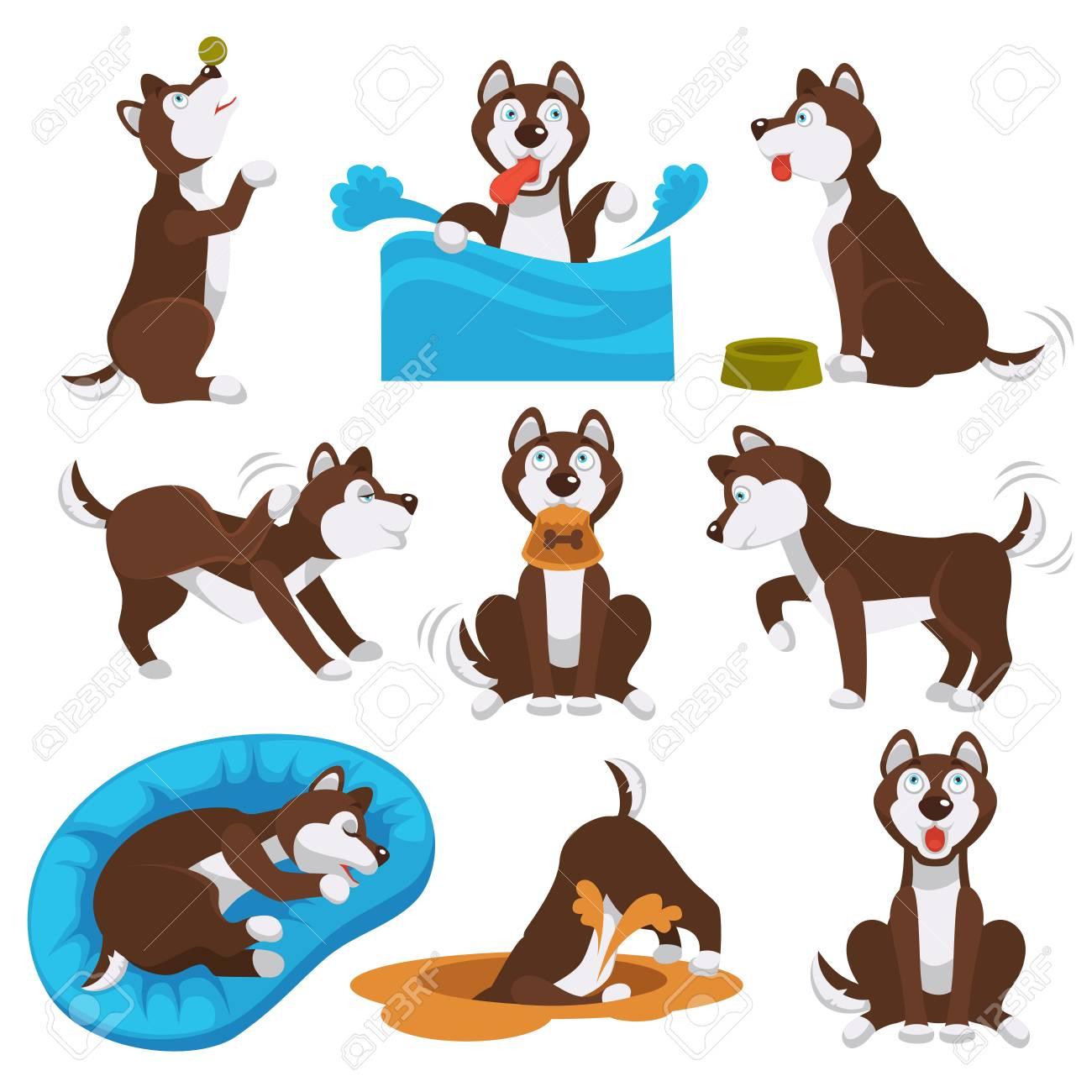 Husky dog pet playing. Vector cartoon character of husky dog...