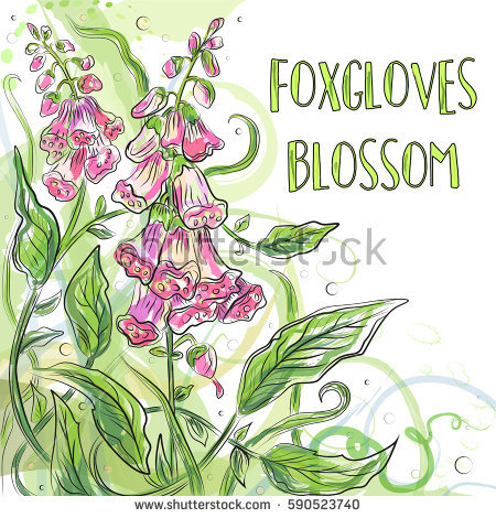 Digitalis Stock Vectors, Images & Vector Art.
