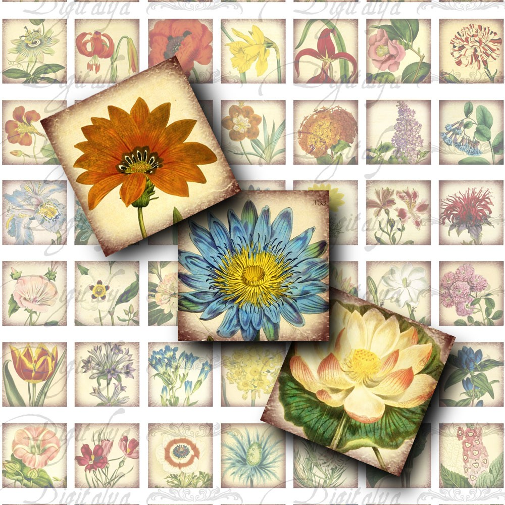 Vintage Herbarium 1 Digital Collage Sheet Square 1x1 by Digitalya.