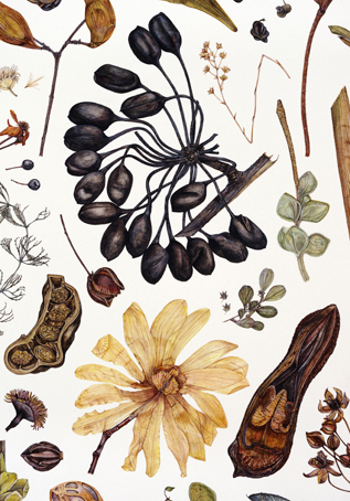 1000+ images about Herbier on Pinterest.