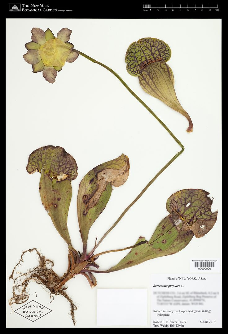 1000+ images about Botany on Pinterest.