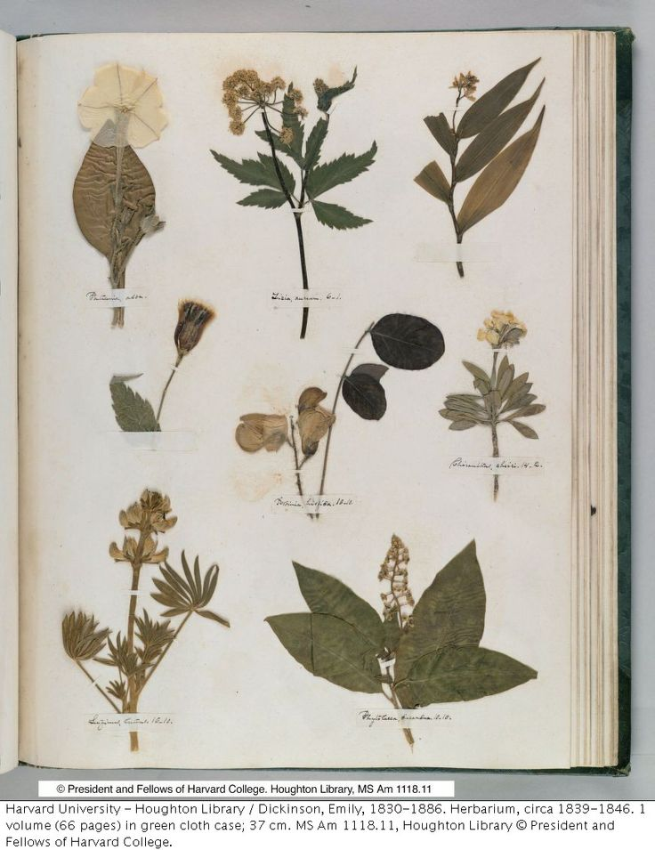 1000+ images about herbarium on Pinterest.
