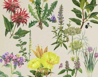 herbarium art.