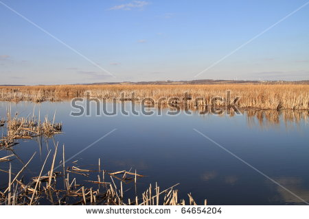 Horicon Marsh Stock Photos, Royalty.