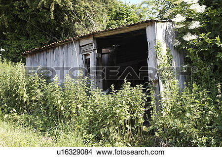 Stock Photo of Nettles growing in front of dilapidated wooden.