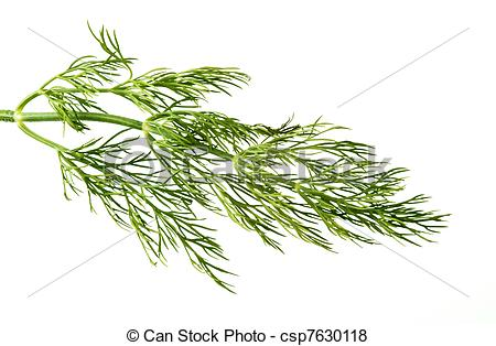 Pictures of Dill weed.