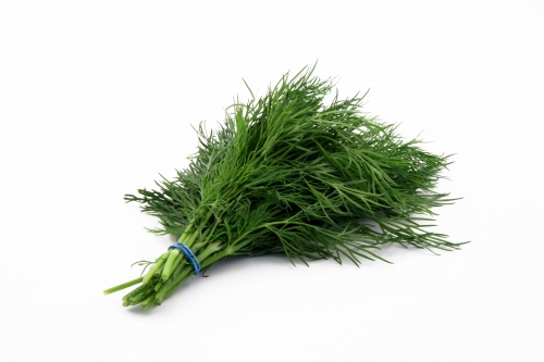 Dill Clipart.