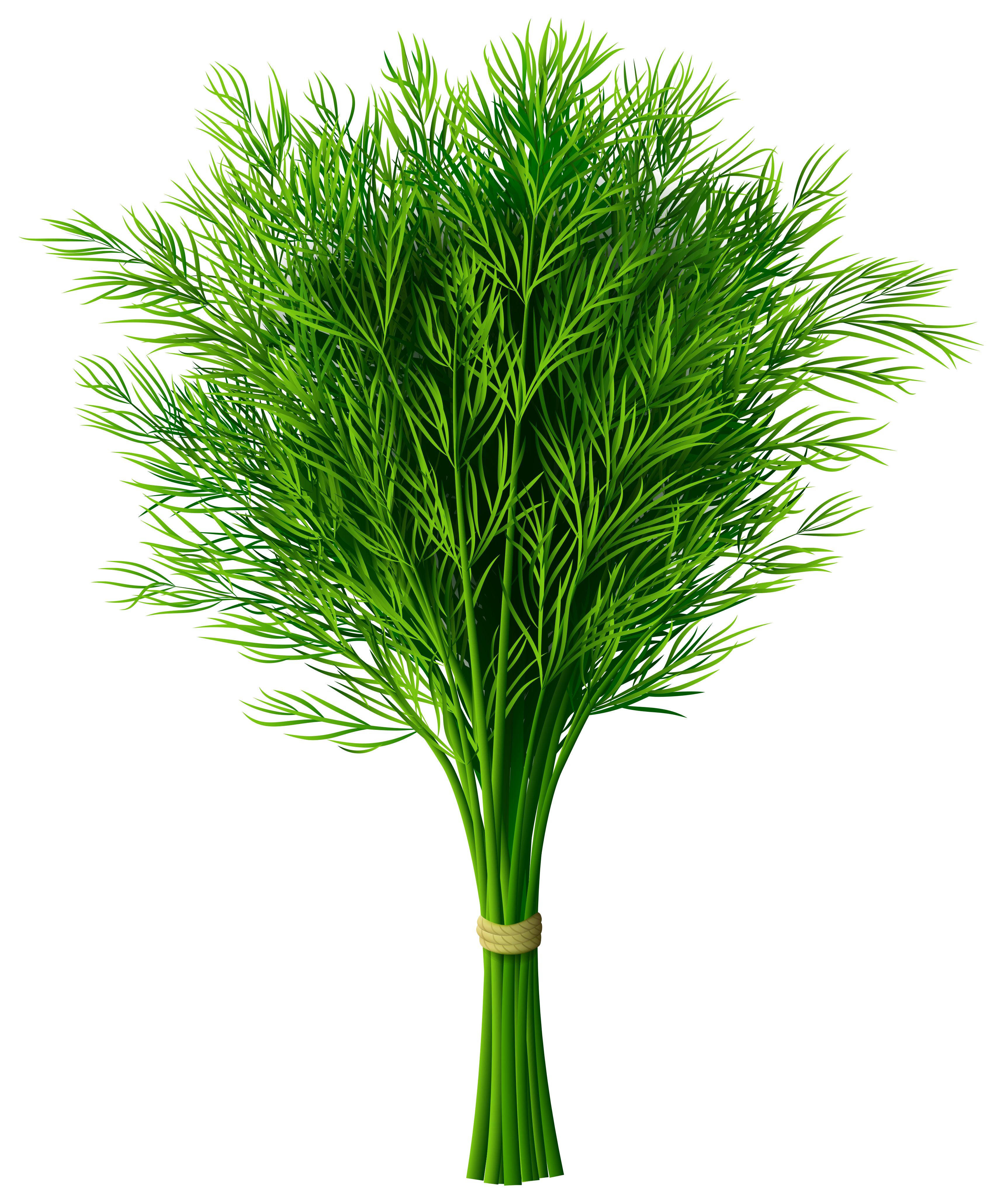 Dill PNG Clip.