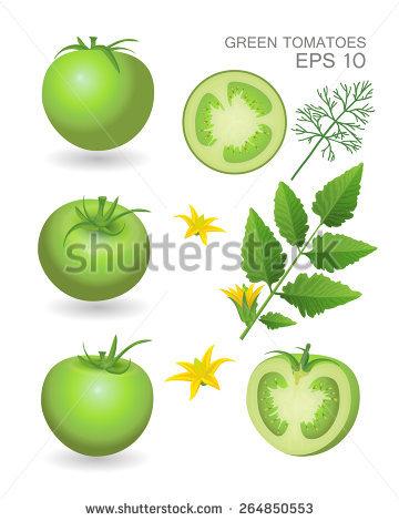 Tomato Leaf Stock Photos, Royalty.