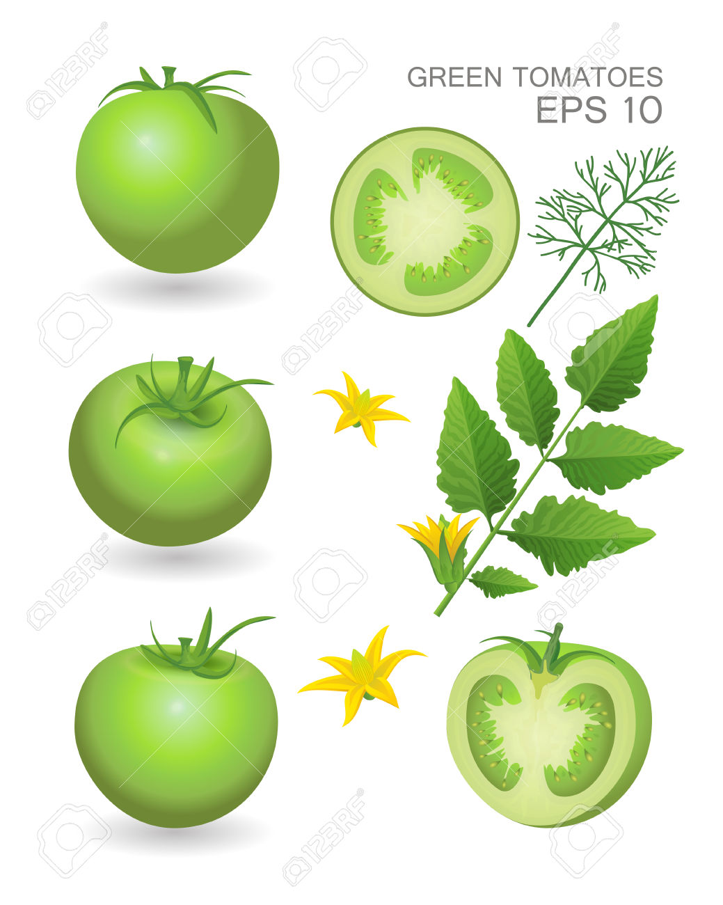 Vector Illustration. Green Fresh Realistic Tomatoes With Leaves.