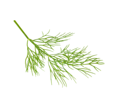 Dill PNG.