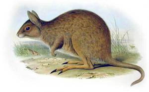 Marsupial Clip Art Download.