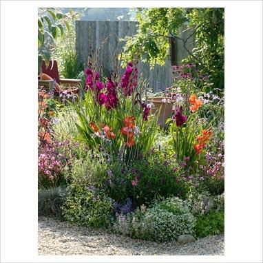 Summer border of Gladiolus, Gaura 'Lillipop Pink', Salvia.
