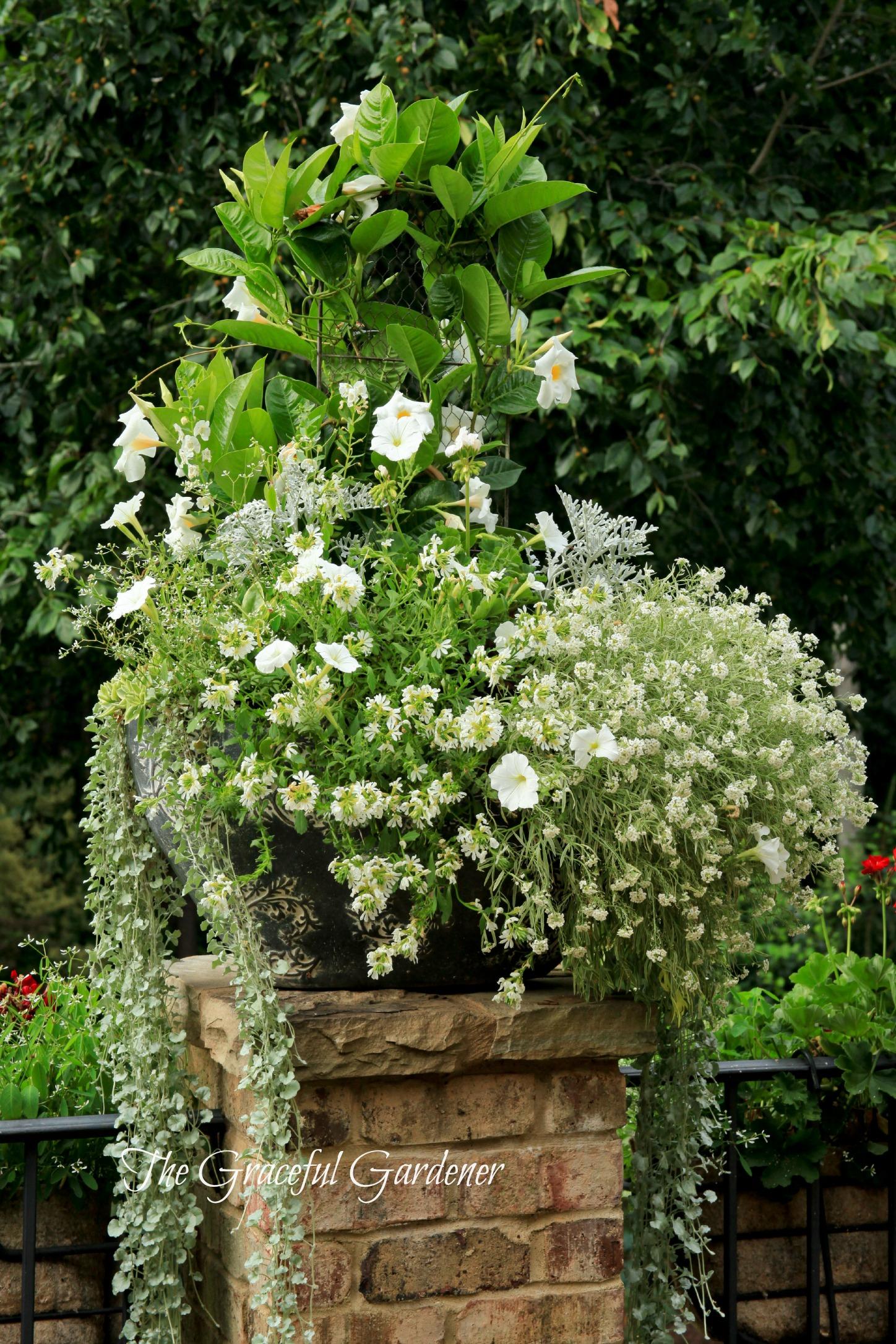 The Graceful Gardener » Summertime In My Garden…The Graceful.