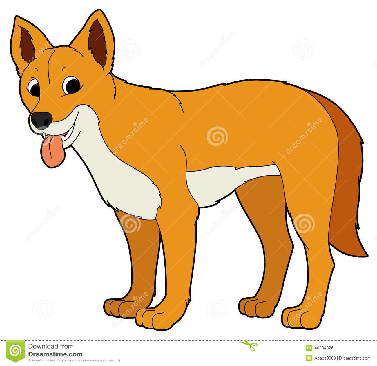 Dingo Stock Illustrations.