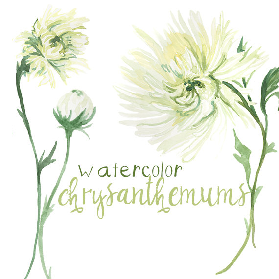 Watercolor Chrysanthemum Flower Clipart White Petals Instant.