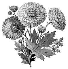 Flower Garden Tools ~ Free Printable Vintage Clip Art.