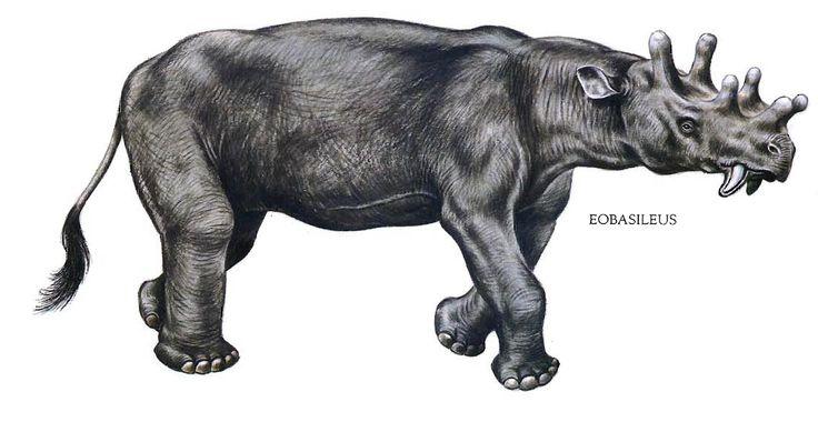 Eobasileus (řád Dinocerata).