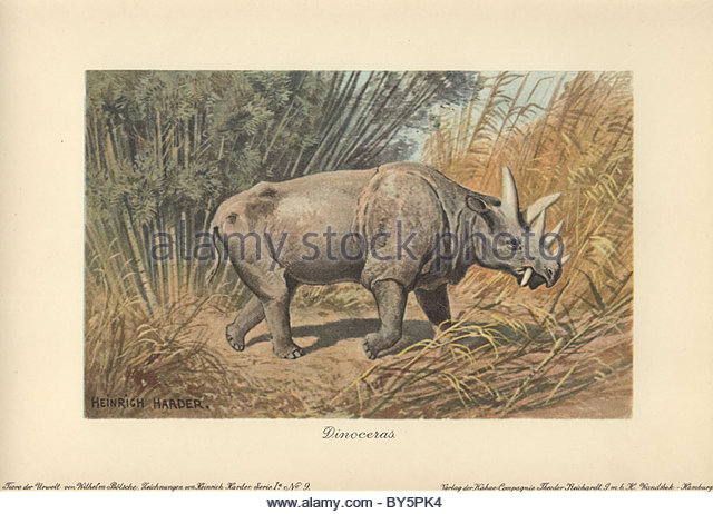 Rhinoceros Like Stock Photos & Rhinoceros Like Stock Images.