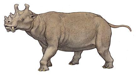 Uintatherium insperatus.