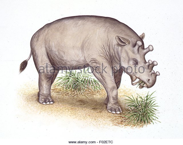 Chewing Grass Cut Out Stock Images & Pictures.