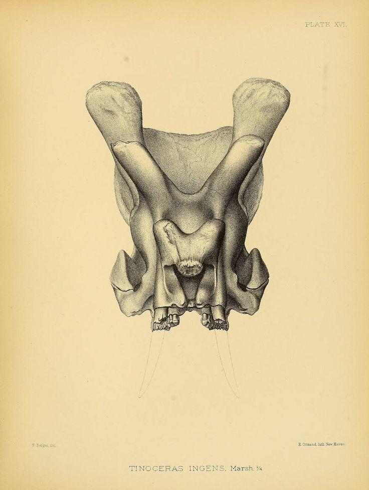 1000+ images about design inspiration: bones on Pinterest.