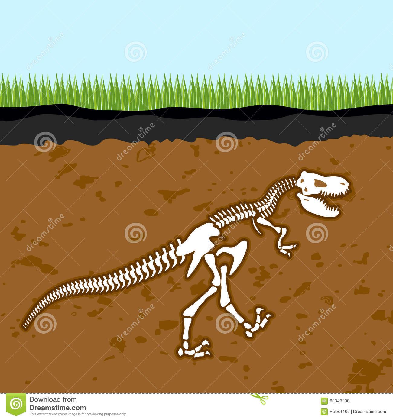 Skeleton Of Tyrannosaurus Rex. Dinosaur Bones In Earth. Fossil.