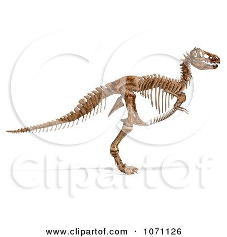 Clipart Tyrannosaurus Rex Dinosaur Skeleton.