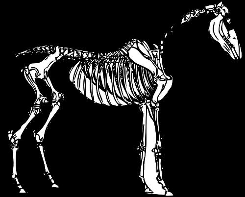 320 dinosaur skeleton clip art free.