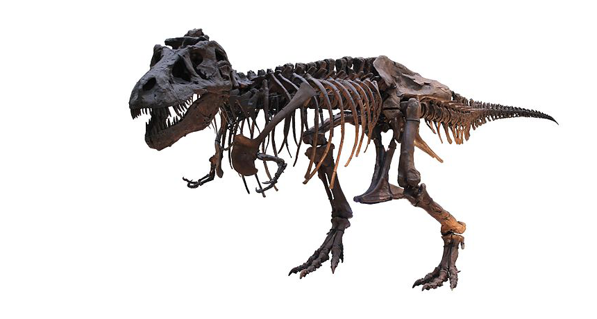 T. rex pulverized bones with an incredible amount of force.