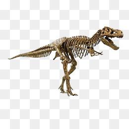 T Rex Skeleton Png & Free T Rex Skeleton.png Transparent Images.