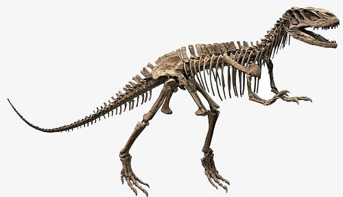 Dinosaur Skeleton PNG, Clipart, Animal, Carnivore, Close Up, Cut Out.