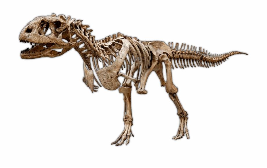 Dinosaur Excavation Kits & Experimental Paleontology.