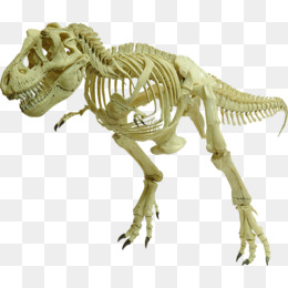 Dinosaur Bones PNG HD Transparent Dinosaur Bones HD.PNG Images.